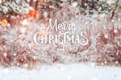 Paisaje escarchado del invierno en fondo nevoso de Navidad del bosque con los abetos y el fondo borroso del invierno con el texto Foto de archivo libre de regalías