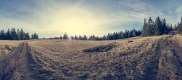 Paisaje espectacular del otoño con el prado rodeado por el bosque del árbol de pino fotos de archivo