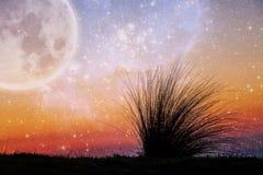 Paisaje extranjero de la hierba de la playa que dobla en el viento en el ingenio de la puesta del sol Imagen de archivo