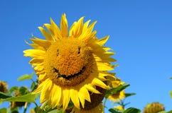 Paisaje fabuloso del girasol con y de la cara con una sonrisa otra vez Imagenes de archivo