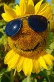 Paisaje fabuloso del girasol con y de la cara con una sonrisa y un s Foto de archivo libre de regalías