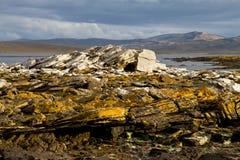 Paisaje Falkland Islands Fotografía de archivo