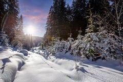 Paisaje fant?stico del bosque del invierno Glowin nevoso helado de los abetos en luz del sol Concepto de las vacaciones de invier imagen de archivo