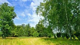Paisaje finlandés del campo en el verano Fotografía de archivo