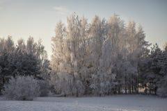 Paisaje frío del día de invierno de Pori fotografía de archivo libre de regalías