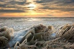 Paisaje frío del invierno fotos de archivo