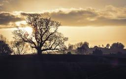 Paisaje frecuentado de la puesta del sol Fotografía de archivo libre de regalías