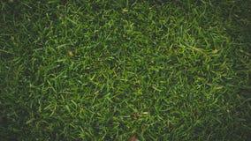 Paisaje fresco natural de la hierba verde imagenes de archivo
