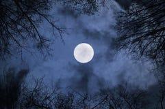 Paisaje gótico del cielo nocturno con la Luna Llena debajo de las nubes y de las siluetas de los árboles desnudos Imagen de archivo libre de regalías
