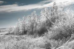 Paisaje genérico del invierno Fotografía de archivo libre de regalías