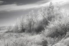 Paisaje genérico del invierno Imagen de archivo