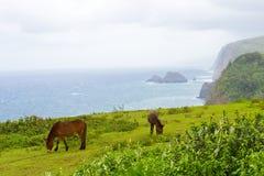 Paisaje grande de Hawaii de la isla con la niebla y los caballos del océano Fotos de archivo libres de regalías