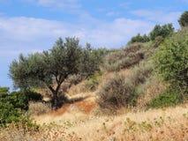 Paisaje griego rugoso de la montaña Imagen de archivo libre de regalías