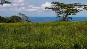 Paisaje hawaiano típico fotografía de archivo
