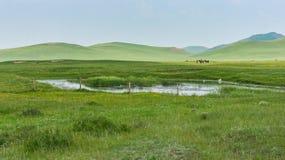 Paisaje herboso y colinas Fotografía de archivo libre de regalías