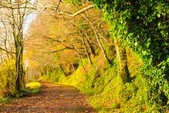 Paisaje hermoso. Callejón Co.Cork, Irlanda de Autumn Pathway. Foto de archivo libre de regalías