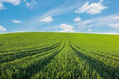 Paisaje hermoso Campo verde claro debajo del cielo con las nubes Foto de archivo libre de regalías