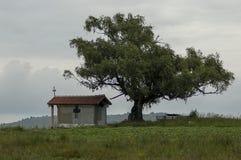 Paisaje hermoso con el árbol de abedul venerable de la primavera y la capilla vieja, situados en la montaña de Plana Foto de archivo