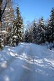 Paisaje hermoso con el camino suburbano en altos árboles nevados en el bosque del invierno después de nevadas el día soleado Imagen de archivo