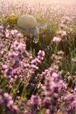 Paisaje hermoso con el campo de la lavanda y el sombrero de paja violetas imagen de archivo libre de regalías