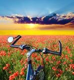 Paisaje hermoso con el centro de la bici de un campo de amapolas i Imagen de archivo
