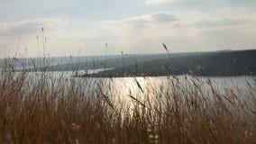 Paisaje hermoso con la hierba que se sacude en el viento En la hierba salvaje hermosa del primero plano en fondo en el río grande almacen de video