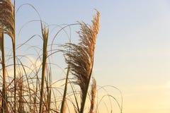 Paisaje hermoso con la puesta del sol en el horizonte, horizont con las hojas Fotografía de archivo libre de regalías