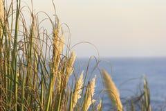 Paisaje hermoso con la puesta del sol en el horizonte, horizont con las hojas Foto de archivo