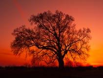 Paisaje hermoso con la silueta de los árboles foto de archivo libre de regalías