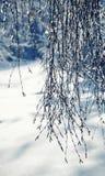 Paisaje hermoso con las ramas del abedul cubiertas con hielo brillante Foto de archivo
