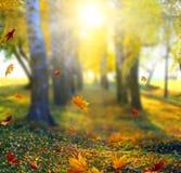 Paisaje hermoso con los árboles amarillos, la hierba verde y el sol imagen de archivo