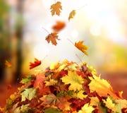 Paisaje hermoso con los árboles amarillos, la hierba verde y el sol color fotos de archivo