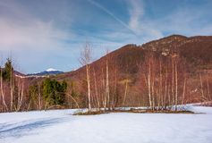 Paisaje hermoso con los árboles de abedul en cuesta nevosa Fotos de archivo libres de regalías