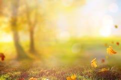 Paisaje hermoso con los árboles, la hierba verde y el sol fotografía de archivo