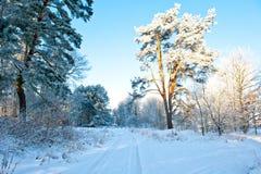 Paisaje hermoso con los árboles nevados - día del invierno de invierno soleado Foto de archivo libre de regalías