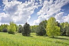Paisaje hermoso con los abedules y las nubes blancas en el cielo azul Fotos de archivo