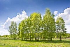Paisaje hermoso con los abedules y las nubes blancas en el cielo azul Foto de archivo