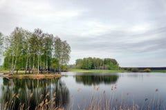 Paisaje hermoso con un lago y los árboles de abedul en día melancólico Imágenes de archivo libres de regalías