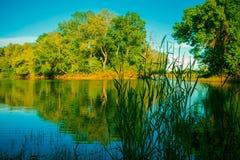 Paisaje hermoso con vistas del lago del bosque Foto de archivo