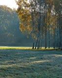 Paisaje hermoso de la mañana con los árboles de abedul Imagen de archivo libre de regalías