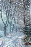 Paisaje hermoso de la mañana del invierno en el parque de la ciudad Imagenes de archivo