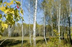 Paisaje hermoso de la madera en caída Foto de archivo