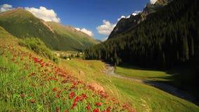 Paisaje hermoso de la montaña con las flores y el río de la montaña almacen de video