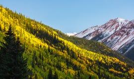 Paisaje hermoso de la montaña en Aspen, telururo, Colorado foto de archivo libre de regalías