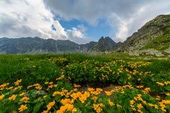 Paisaje hermoso de la montaña en Transilvania Foto de archivo