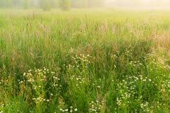Paisaje hermoso de la naturaleza con el prado de niebla Imágenes de archivo libres de regalías