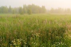 Paisaje hermoso de la naturaleza con el prado de niebla Imagen de archivo libre de regalías