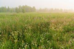 Paisaje hermoso de la naturaleza con el prado de niebla Foto de archivo libre de regalías