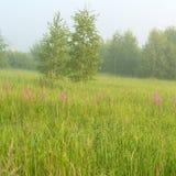 Paisaje hermoso de la naturaleza con el prado de niebla Fotos de archivo