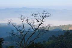 Paisaje hermoso de la naturaleza y de la niebla en Phukradung, Tailandia fotografía de archivo libre de regalías